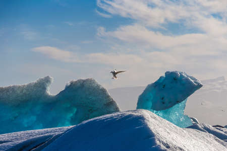 Seagulls above floating icebergs in Glacial Lagoon Jokullsarlon, South Iceland