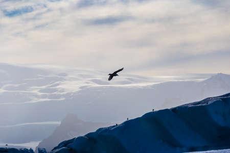 Seagulls above floating icebergs in Glacial Lagoon Jokullsarlon, South Iceland
