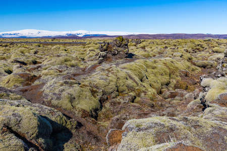 Mossy lava field near City of Vik, Iceland