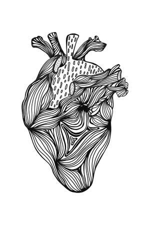 the human heart with a monochrome line drawing. artistic touch isolated on a white background. vector illustration drawn by hands. For interior design, posters, t-shirts