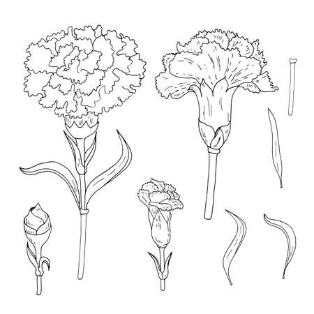 A set of carnation flowers and leaves for construcion of wreathes and bunches. Changeable, white.