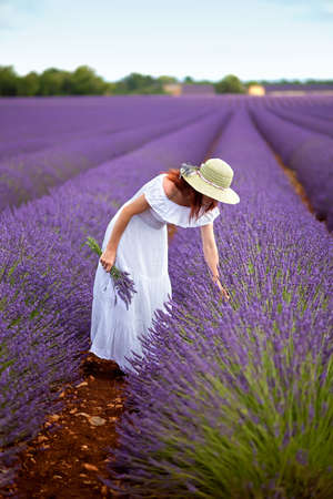 Beautiful female in field of lavender, wearing romantic white dress and hat, picking lavender  Holding a bouquet of lavender in her hand  Blue sky above