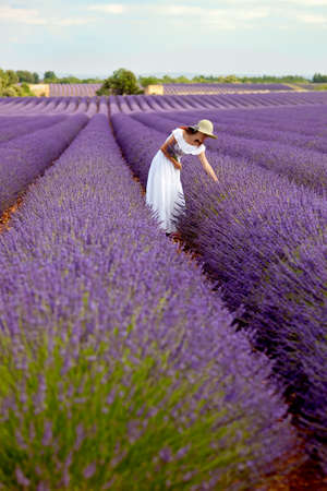 longshot: Young woman in white romantic dress with hat picking some lavender in lavender field, holding a bouquet of lavender, above her the sky  Long-shot