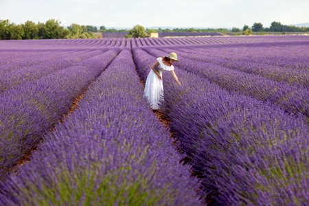 Young romantic woman picks some lavender from purple lavender field  In white dress with hat, in her hand a bouquet of lavender, sky above visible  Overview photo  Stock Photo