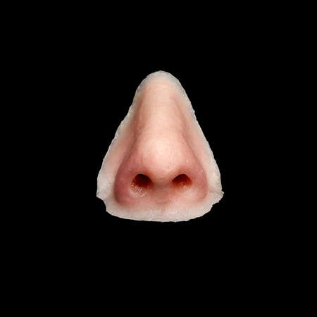 nostrils: Artificial facial nose isolated on black background. Mostly used in film props and patients with damaged nose.