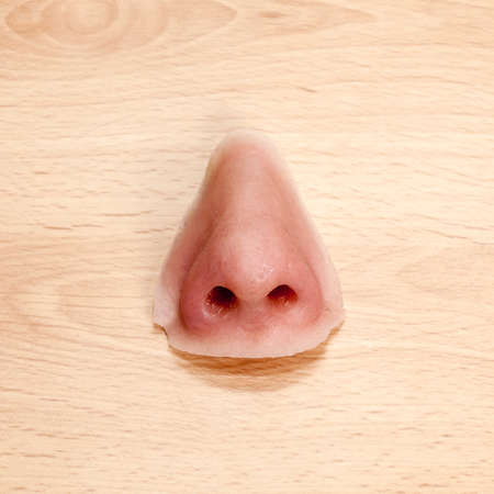 nose close up: Artificial nose made from silicone for a facial prosthesis.