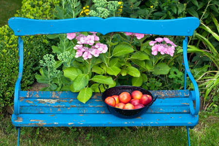garden bench: Aerial Shot of Red Apples on Black Bowl On Top of Old Bench at the Garden. Stock Photo