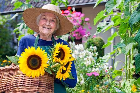 vejez feliz: Mujer mayor feliz con el sombrero de Brown Llevar Cestas de frescos Girasoles en el jard�n, sonriendo a la c�mara