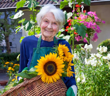 vecchiaia: Close up Felice donna anziana che porta un cesto con Girasoli attraenti alla Casa Giardino, guardando la telecamera. Archivio Fotografico
