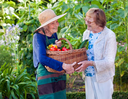 camaraderie: Two Happy Senior Women Holding a Basket of Healthy Fresh Vegetables Together at the Garden. Stock Photo