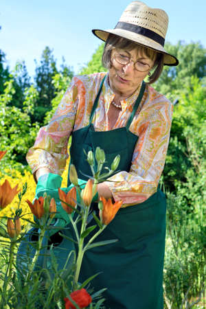 sunhat: Middle-aged woman wearing a straw sunhat, apron and gloves watering her flowers in a lush green garden with a watering can, close up three quarter view