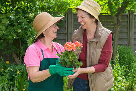 camaraderie: Two happy senior ladies gardening together laughing and chatting over a colorful potted flower in a lush spring garden