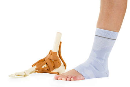 Profile of Human Foot Wrapped in Flexible Elastic Orthopedic Ankle Support Brace Beside Skeleton Model with Tendons in Studio with White Background with Copy Space