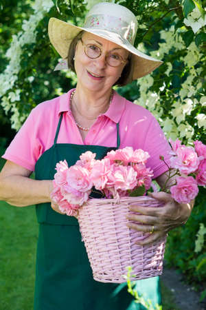 cuttings: Single female gardener wearing eyeglasses  green apron and straw hat holding pink basket full of rose flower bloom cuttings in yard.