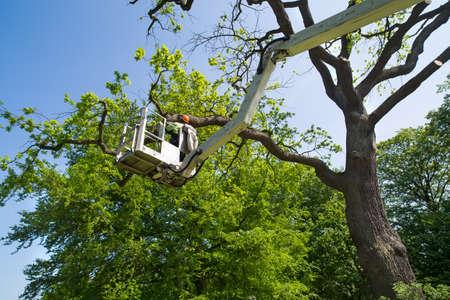 체리 피커의 유압식 관절부 팔에 올라가는 플랫폼을 사용하여 나무를 가지 치기하는 정원사 또는 나무 외과 의사 스톡 콘텐츠