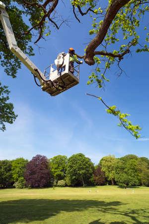 Boomverzorger of tuinonderhoud werknemer met behulp van een hoogwerker op een lommerrijke groen voorjaar boom in een park snoeien trimmen uit takken met een kettingzaag uit de hoogwerker
