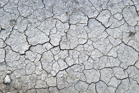 mire: Cracked and dried land background