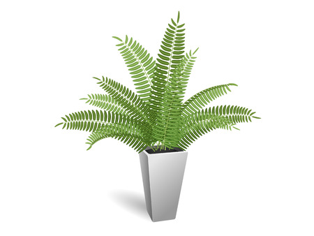 houseplant: Ornamental plant. Fern in a pot. On a white background.