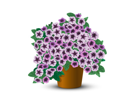 flower baskets: Bush petunias in a pot on a white background  Illustration