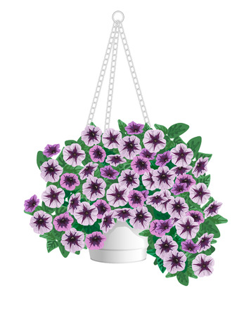 petunia: Bush petunias in a pot on a white background
