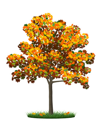 saccharum: Realistic autumn tree and grass on a white background