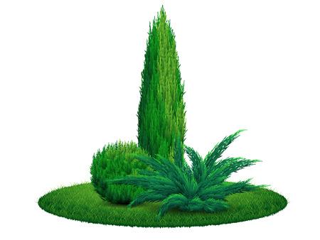 Thuja tree juniper bush on the grass.  Ilustração