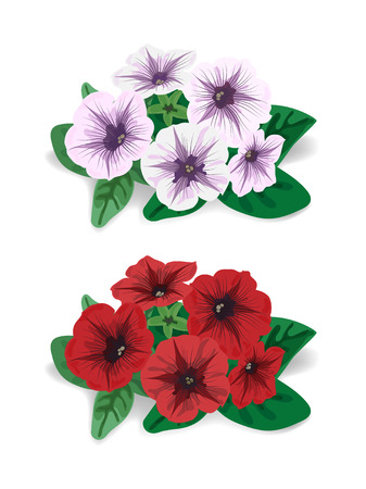 petunia: red and white petunia flower bush with shadow on white background Illustration