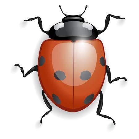 ladybird: red beetle ladybird, isolated with shadows Illustration