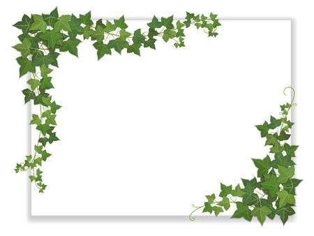 spartiti: foglio di carta bianca decorata appeso edera