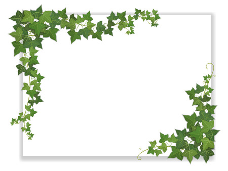 white paper sheet decorated hanging ivy Ilustracja