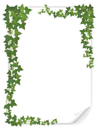 biały arkusz papieru pusty zdobione gałęzie bluszczu Ilustracje wektorowe