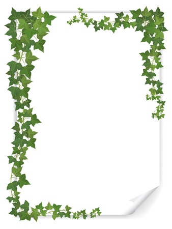 greenery: white empty paper sheet decorated branches of ivy Illustration