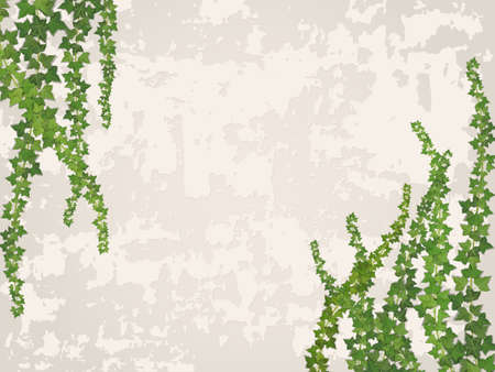 verdant: hanging vines on the background of old stucco wall - vector background