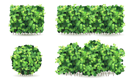 hedges: Set of bushes of different shapes on a white background isolated, stylized vector illustration.