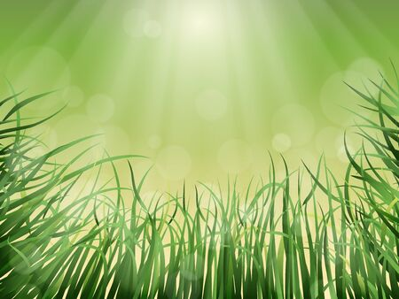 glare: Nature vector background - grass, the sun rays and glare.
