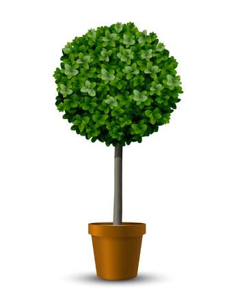 Decorative trimming boxwood tree in flowerpot. Stock Illustratie