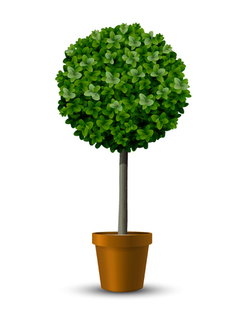 Decorative trimming boxwood tree in flowerpot. Vectores