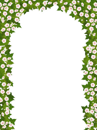 The arch of climbing plant with flowers on a white background