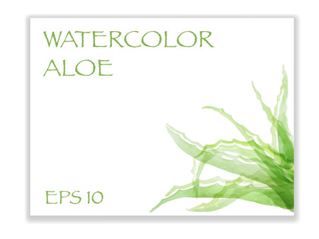 aloe vera plant: The leaves of medicinal plants - Aloe Vera, vector illustration in watercolor style.