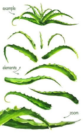 Set of watercolor aloe leaves. Separate the leaves and example. It contains elements of the auto-tracing. Stock Illustratie