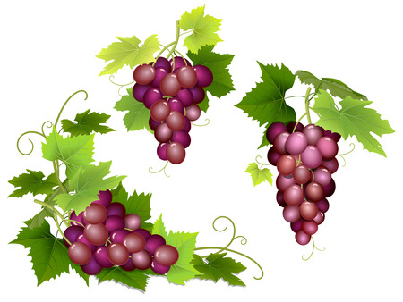 vid: Conjunto de racimos de uvas de color rosa con hojas verdes.