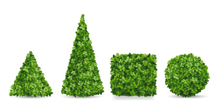 Boxwood shrubs of different forms. Topiaries in the shape of a pyramid, sphere, cube. Decorative elements of the garden landscaping.