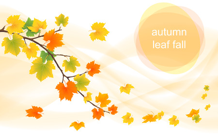 Autumn leaves falling in the wind and the sun.