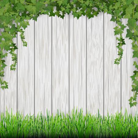 잔디와 화이트 빈티지 나무 널빤지 배경에 매달려 아이비.
