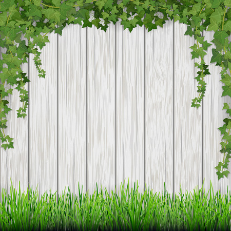 Grass and hanging ivy on white vintage wooden planks background. Ilustracja