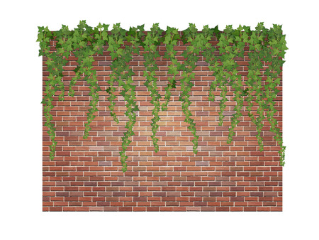 Hanging down ivy shoots on the brick wall background. Vectores