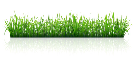 Green grass, Isolated with reflection on white background. Vector Illustration