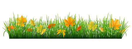 fallen: Autumn fallen leaves lay a strip of grass. Vector grass and leaves on a white background. Illustration