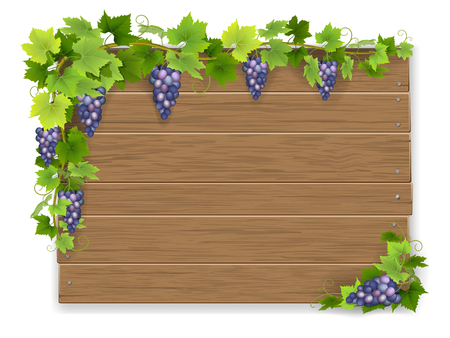 Bunch grapes on wooden sign background Illustration