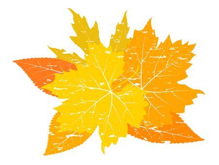 fallen leaves: Vintage autumn leaves. Colorful fallen leaves scratches.